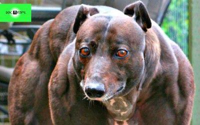 10 de las mascotas extrañas en Internet