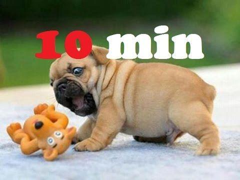 Recopilación de videos divertidos de perros