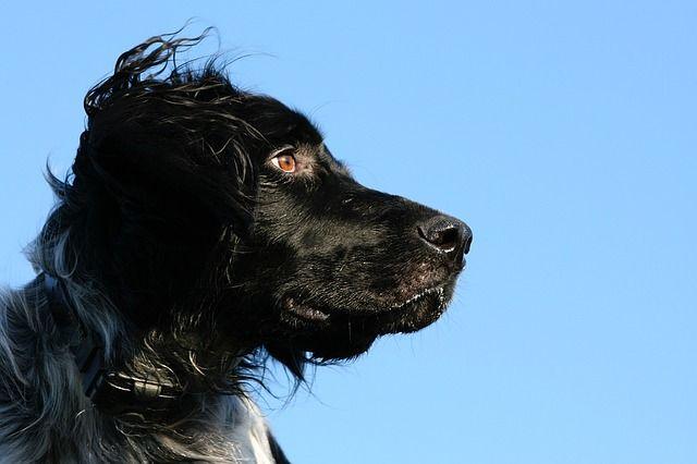 ¿Cómo debo cuidar a mi perro?