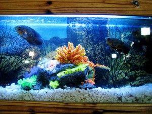 peces y sus peceras