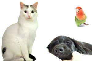 tiendas online para animales