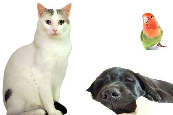 Beneficios de comprar en las tiendas online para animales