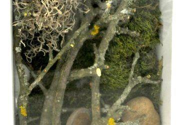 Dã © cor terrario Lucky Reptile experiencia de vida de selva