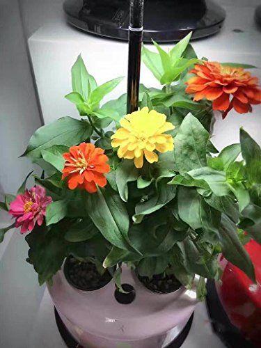 GZD Parque agrícola urbano inteligente planta crecimiento máquina agua cultura flores 3 hoyos lámpara de mesa flor plántulas plantación de peces accesorios , milk white , mascotas