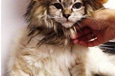 MA-on Peluca de melena de león para perro o gato, disfraz para mascotas