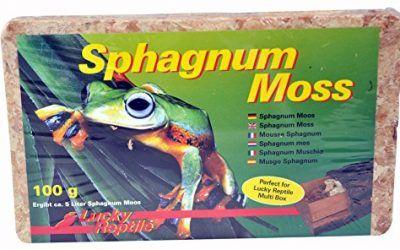 Fondo terrario sustrato Lucky Reptile spaghnum moss 100 gr.