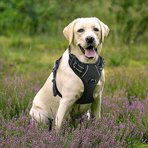 Correa de Perros Arnés de Mascotas Domésticas Correa con Manija y Material Reflectante Fácil de Andar Sin Cinturón Color Negro Tamaño Grande , mascotas