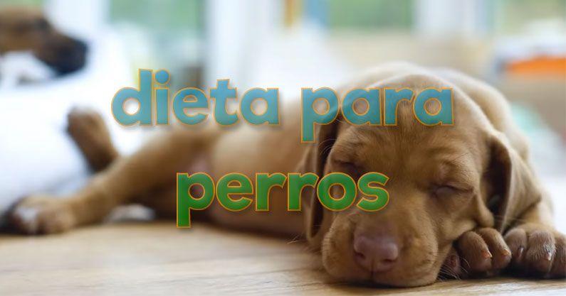 Dieta para perros y otros animales de compañía