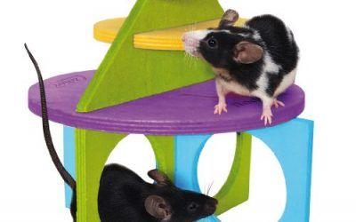 ZOLUX Área de juegos de madera rody' Kit Mini 2para pequeños roedores (gerbilles, hámster, ratón)