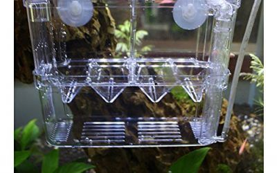 Peces de Acuario Incubadora Flotante Criadero Criador Case de Cría (Transparent)
