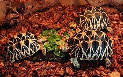 JRTAN&Pet Tortuga y Reptiles Sustrato Alfombra Tortuga y Reptiles Corteza Corteza Pino Corteza Escalada Caja paisajismo 950G, partículas Medianas