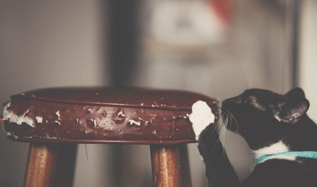 Todas las ventajas de los rascadores para gatos y dónde adquirirlos