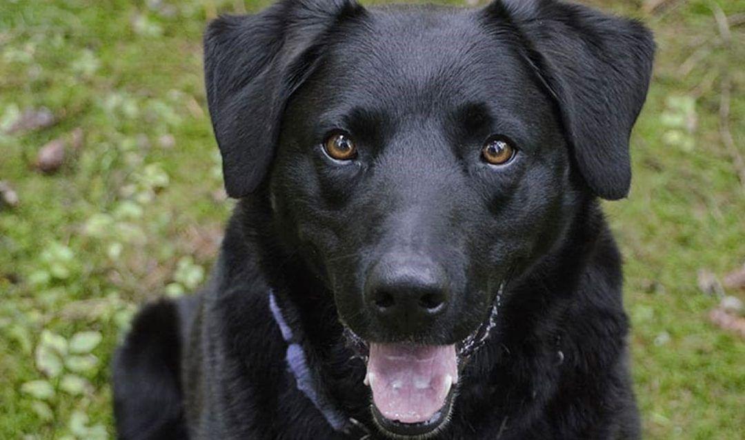 Descubre todo sobre la plaga de chinches y la manera en que pueden afectar a tus mascotas
